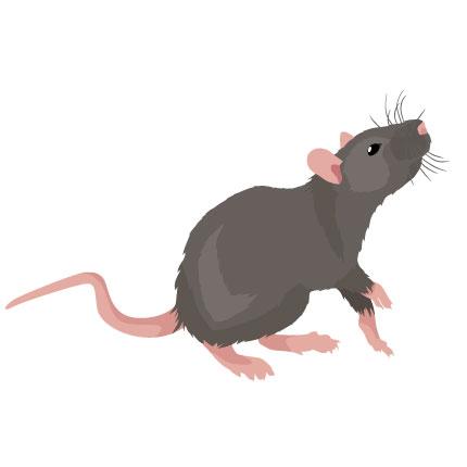 Kammerjäger- Schädlingsbekämpfung Eschwege Ratten Mäuse