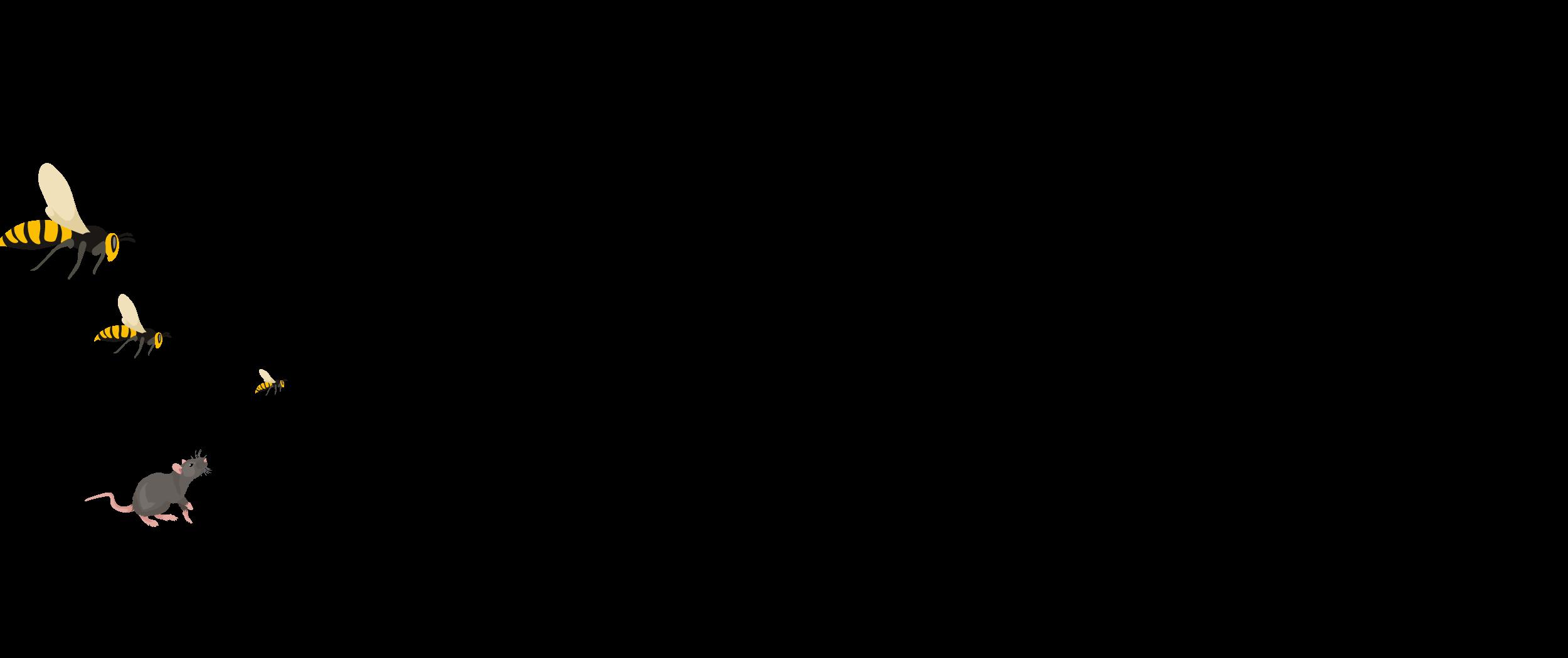 Schädlingsbekämpfung Eschwege Wespen Schaben